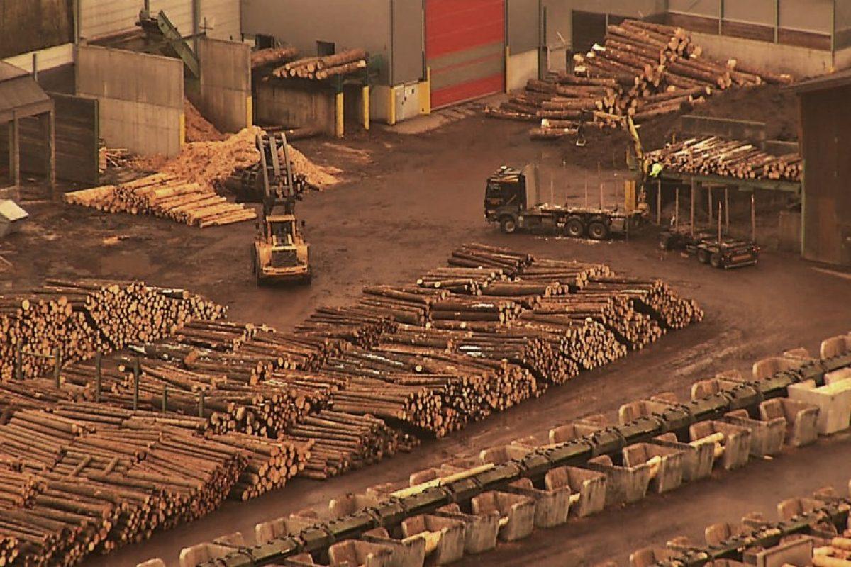 MASACRAREA pădurilor de către Holzindustrie Schweighofer a fost pusă la cale de PSD! | Năstase a PROPUS, Iliescu l-a DECORAT pe Gerald Schweighofer