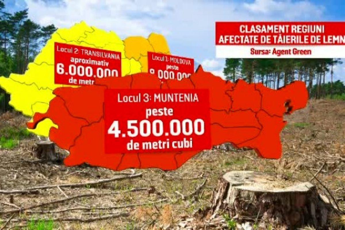 Datele privind starea pădurilor din România ar arăta o catastrofă. Guvernul, acuzat că ține ascunse informațiile